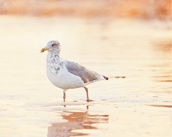 Seagull on Beach Photography Print by CarolynCochrane.com