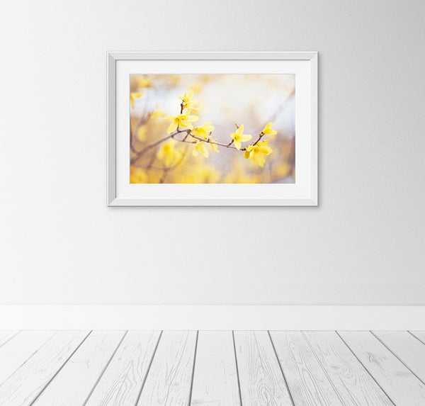 Yellow Forsythia Flower Photography by carolyncochrane.com