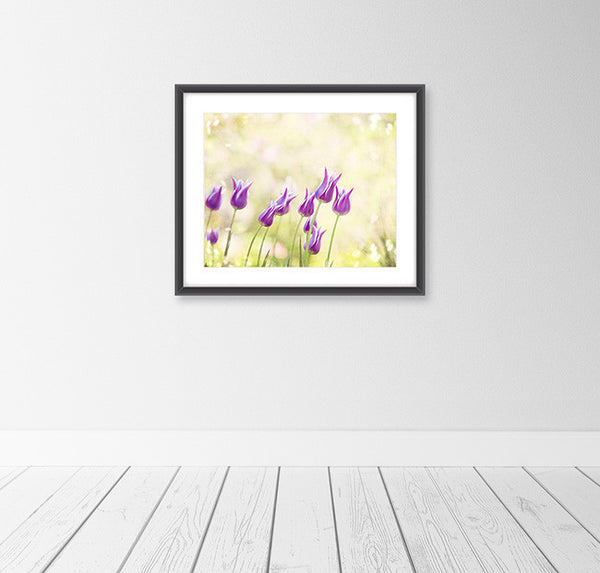 Yellow Purple Tulip Flower Photography by Carolyn Cochrane