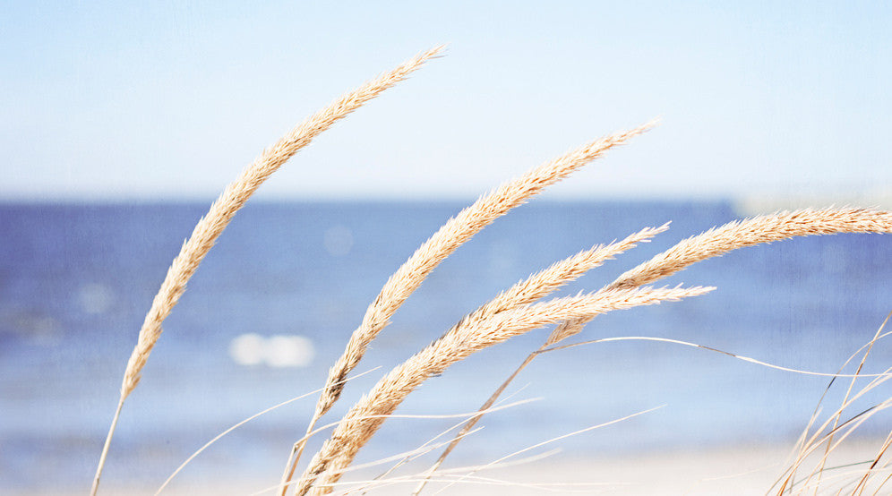 Beach Grass Photograph