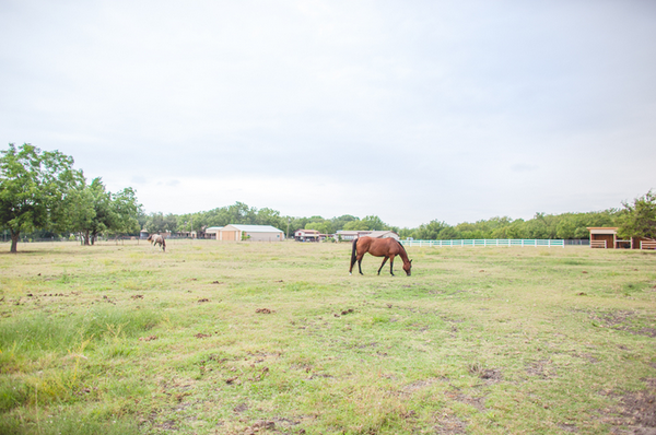 Horse, Barn, Texas Country