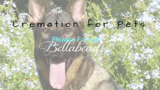 Cremation for Pets