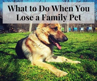 What To Do When You Lose A Family Pet