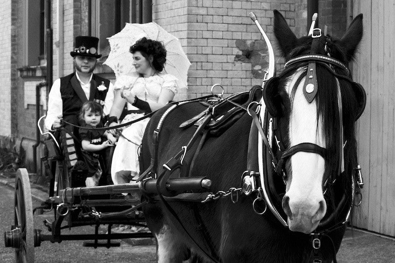 beautiful clydesdale horse and carriage for a steampunk wedding from Clydesdale Services