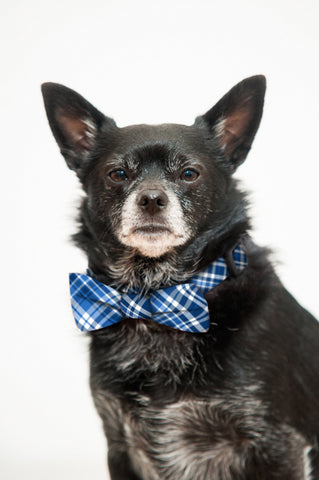 Blue, Black and White Plaid Bow Tie and Collar Set