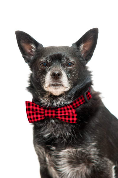 Red Buffalo Plaid Bow Tie and Collar Set