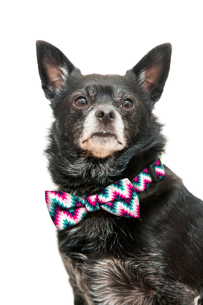 Pink and Black Tribal Bow Tie and Collar Set