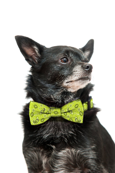 Green Bandana Bow Tie and Collar Set