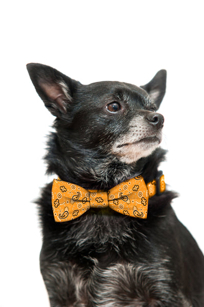 Orange Bandana Bow Tie and Collar Set