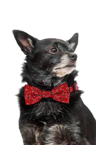 Red Bandana Bow Tie and Collar Set