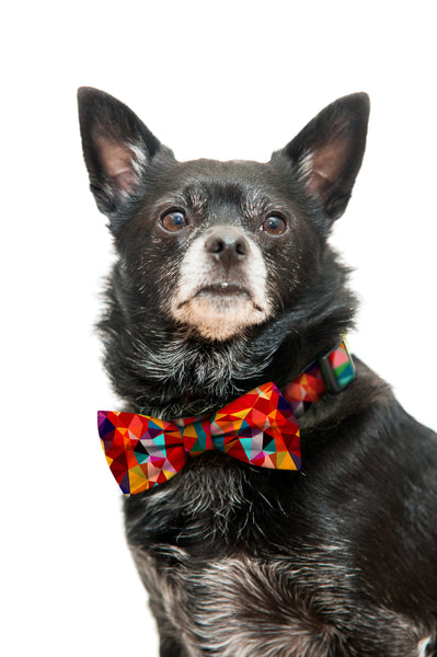 Colorful Geometric Bow Tie and Collar Set