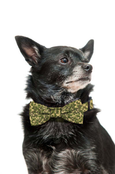 Camo Bow Tie and Collar Set