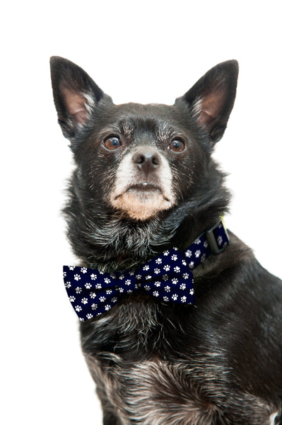 Black and White Paw Prints Bow Tie and Dog Collar