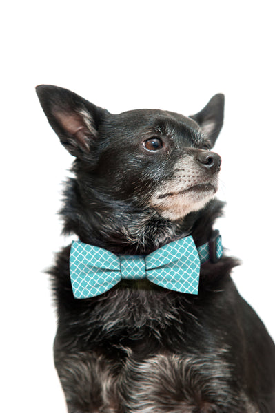 Teal and White Flower Bow Tie and Collar Set