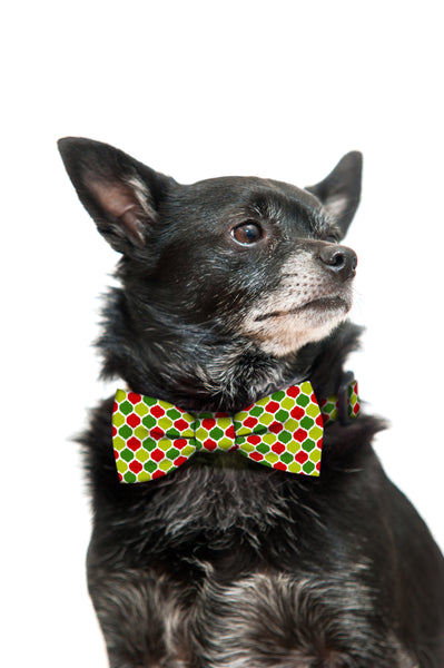 Holiday Christmas Colors Bow Tie and Collar Set