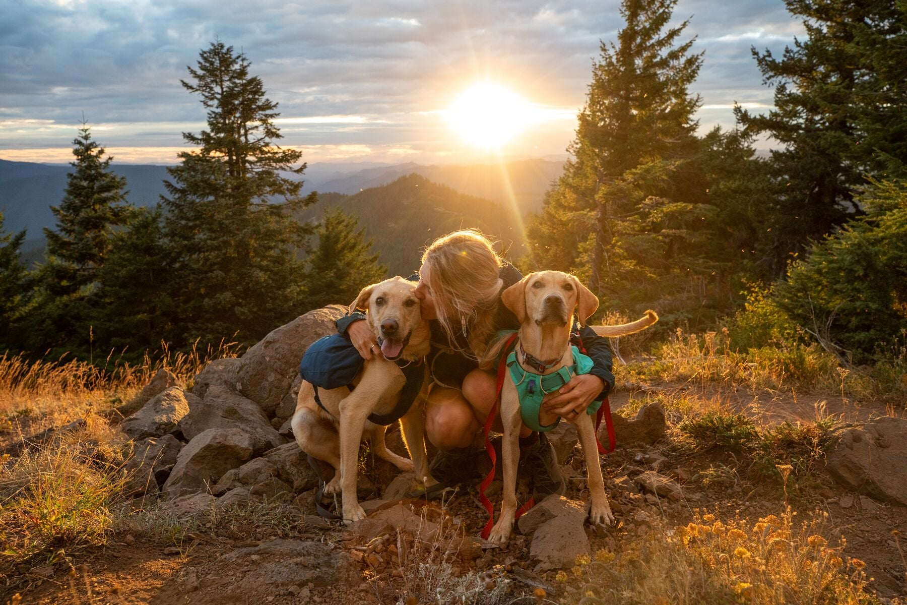 Ruffwear Switchback Harness & Front Range Dog Harness. Two Labradors wearing them and cuddling their owner in a sunset.