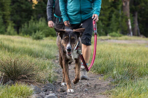 NEW! Crag Leash (2020) - Adjustable Dog Lead, Hand-Held or Waist-Worn