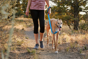 A greyhound walking with a Blue Ruffwear Crag Dog Collar and matching Crag Dog Leash