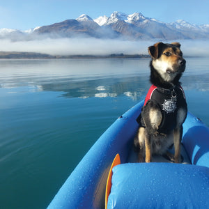 Float Doggy by D-Fa Dog Life Jacket on Dog in Boat