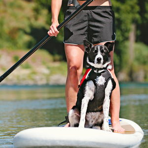 Float Doggy by D-Fa Dog Life Jacket on Dog on SUP Board