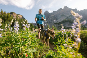 Ruffwear Front Range Harness in Huckleberry Blue - dog and man walking in mountains
