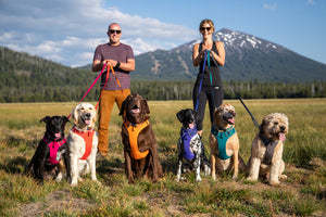 Ruffwear Front Range Dog Harness showing dogs wearing all colours