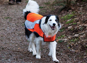 High Visibility Vest - Lightweight, Mesh Hi-Viz Dog Coat