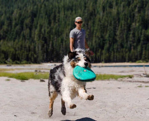 Dog catching a Ruffwear Hover Craft Dog Toy