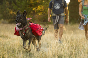 Ruffwear Palisades Pack Dog Backpack Hiking Lifestyle Shot on German Shepherd