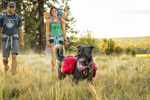 Ruffwear Palisades Pack Dog Backpack Hiking Lifestyle Shot 3