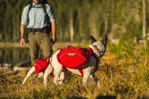 Ruffwear Palisades Pack Dog Backpack Hiking Lifestyle Shot