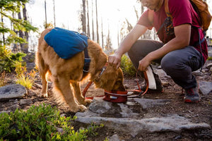 Ruffwear Quencher Bowl Golden Retriever Eating