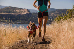Ruffwear Roamer Leash Lifestyle shot showing running with it waist-worn