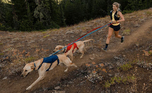 Ruffwear Roamer Leash Lifestyle photo running with 2 dogs