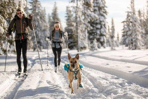 Singletrak Pack - Sleek Dog Backpack with Hydration Bladders