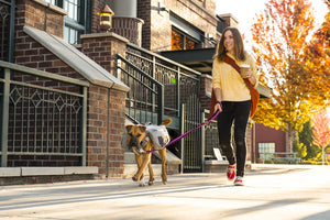 Ruffwear Commuter Dog Backpack Lifestyle Shot City Dog Walking