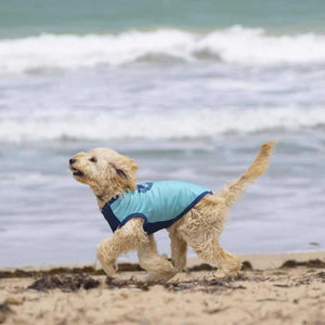 Dog Rashie by SurfDog in Blue on a Groodle