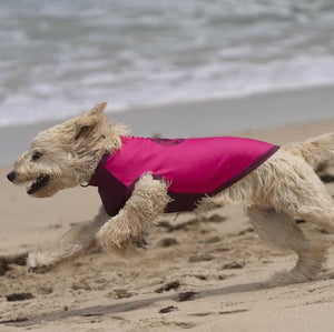 SurfDog Rashie on a Groodle in Pink