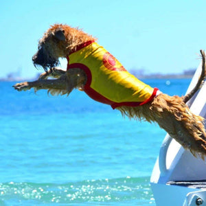 SurfDog Rashie on a Dog Jumping