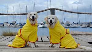 Two smiling Retrievers wearing Yellow Surf Dog Beach Robes