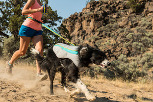 Border Collie wearing Ruffwear Swamp Cooler and running with human