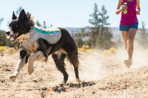 Dog wearing Ruffwear Swamp Cooler Running