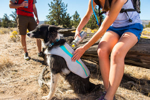Swamp Cooler - Cooling Dog Vest