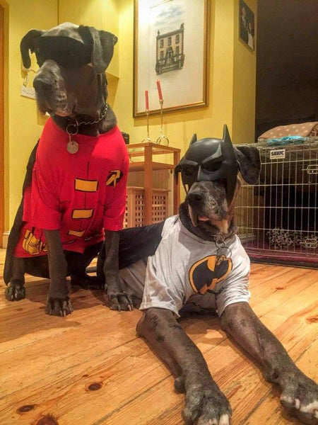 Batman robin dog costume