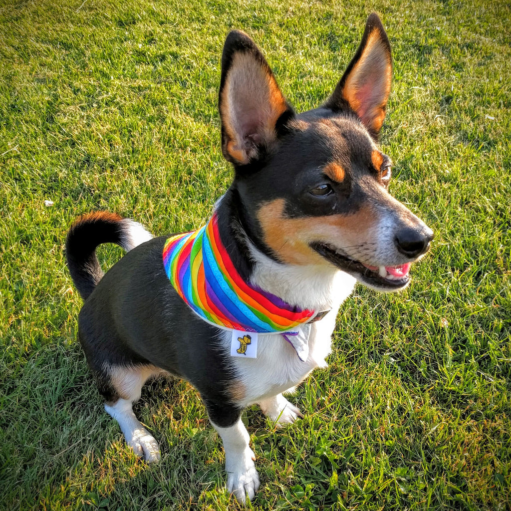 Little Hound Dog Bandana - Pride