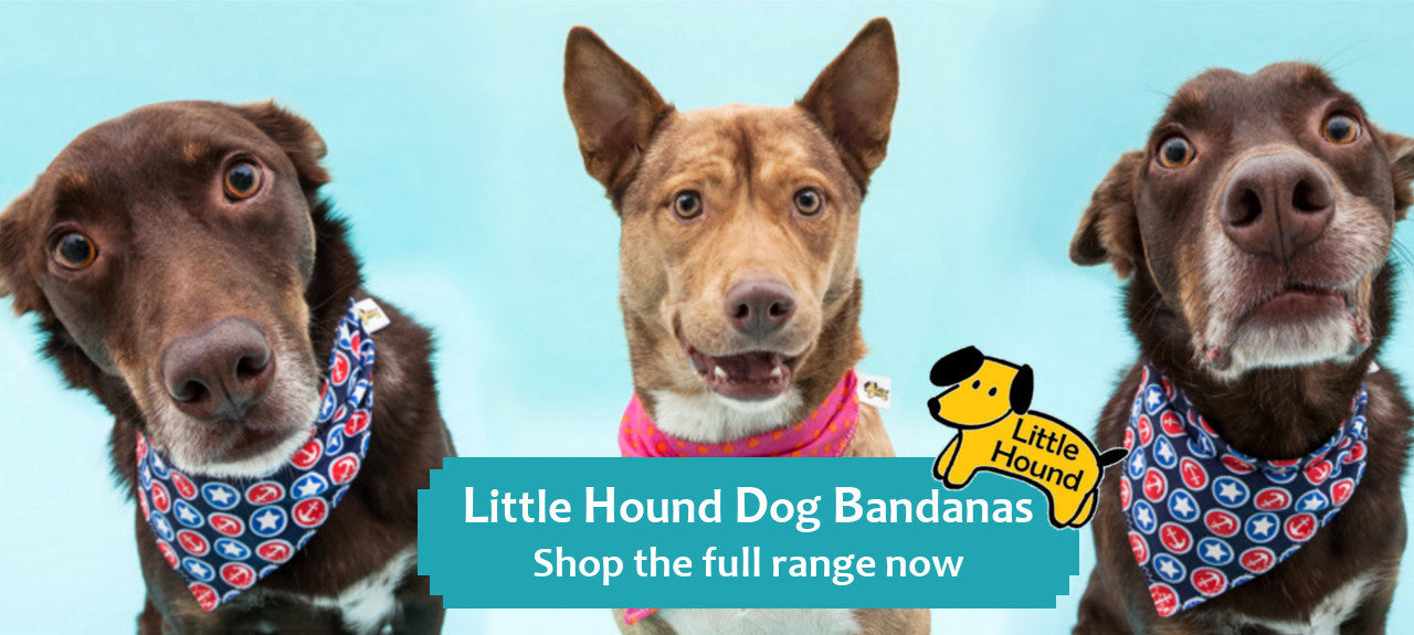 Little Hound Dog Bandanas