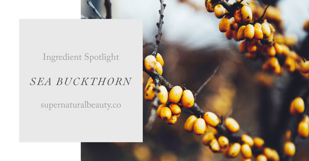 Ingredient Spotlight: Sea Buckthorn