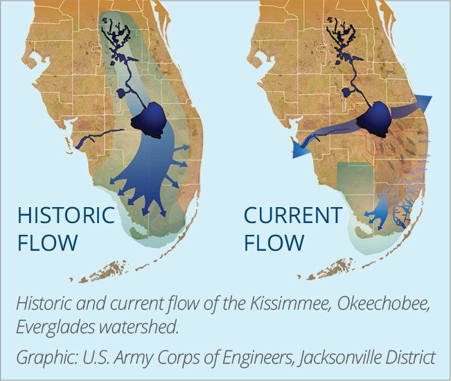 Okeechobee Runoff Causing Major Issues
