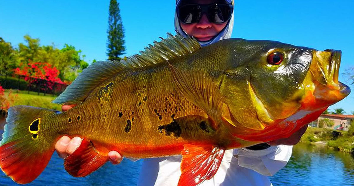 What is the best lure for peacock bass