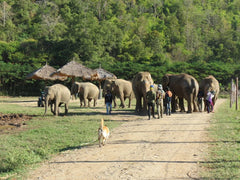 Dogs, Cats and ........ Elephants!